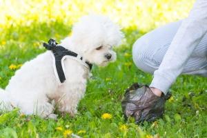 Picking up dog poop