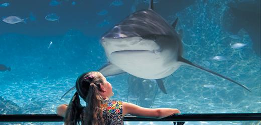 Shark_Bay.jpg